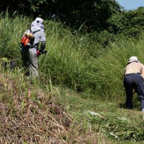 벌초하는 방법 및 벌초시 유의 사항